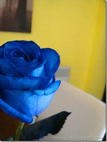 伦敦的夏天 London '09 ~第21章 蓝色玫瑰。趣事连篇